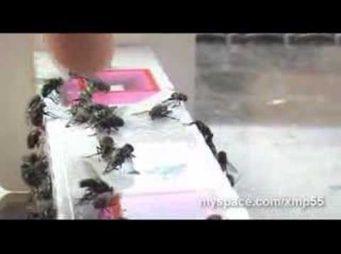 World's Best Fly Trap