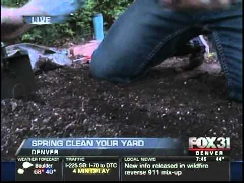 Spring Clean Your Yard (Fox 31)
