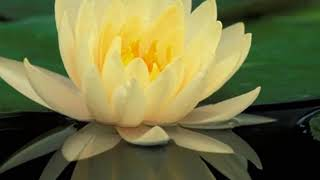 Download Медитация на здоровье от Луизы Хей Video