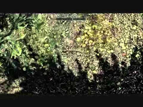 Skyrim: Invisible Chest-Solitude