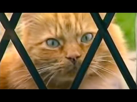How to stop your cat spraying indoors - Barking Mad - BBC Pets