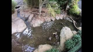 We're going inside our otter habitat!