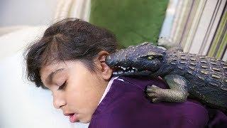 التمساح يعض لانا ....!!!