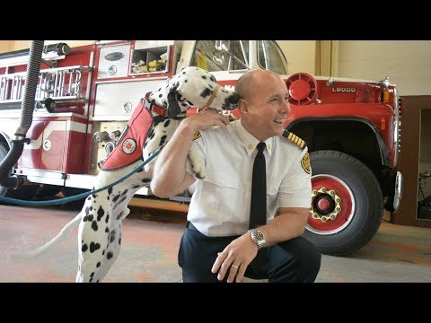 New tool for firefighters could help save your pet