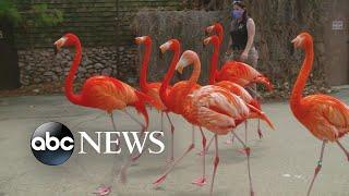 Denver Zoo's 'new normal'