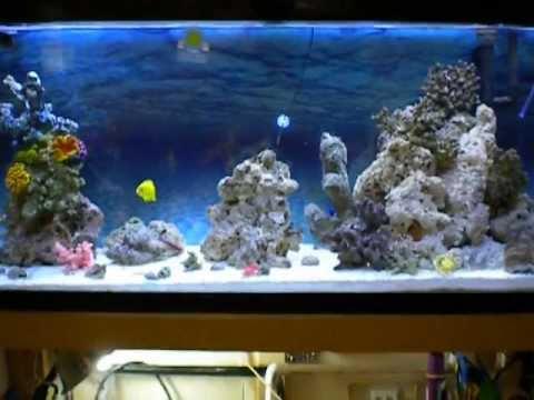 DIY 20gallon custom sump refugium 55gallon saltwater marine coral reef tank aquarium update.