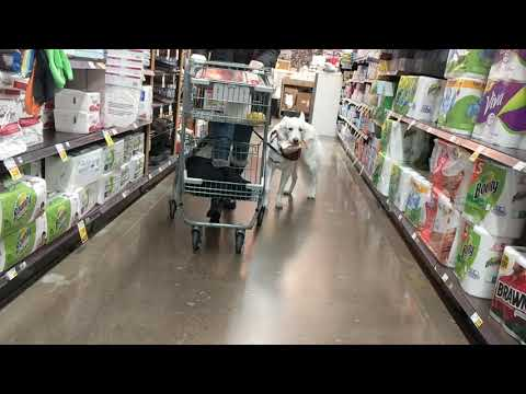 Service Dog Kayenne Carries Her Own Groceries