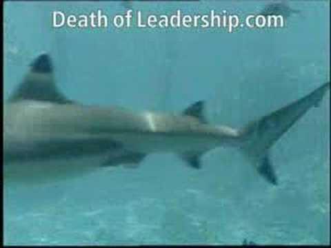 Leadersharks are killing Leadership