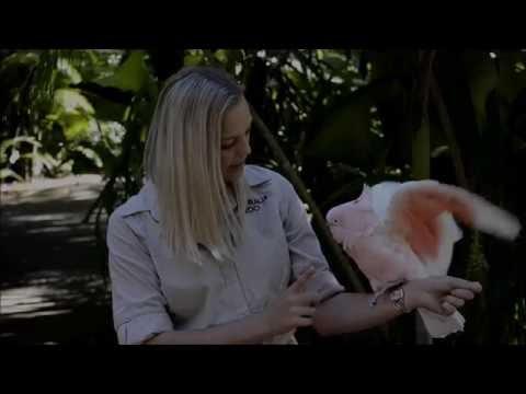 COCKATOO -- Australia Zoo -- the keepers do a great job.