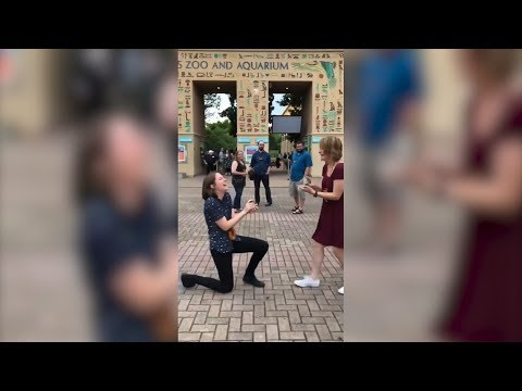 Couple Shocked When They Both Bring Engagement Rings to Zoo For Proposal
