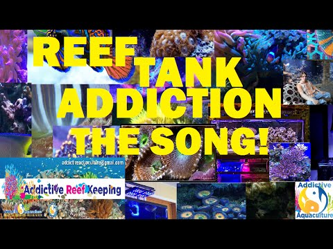 Reef Tank Addiction Song!!! (Addictive Reef Keeping Version)