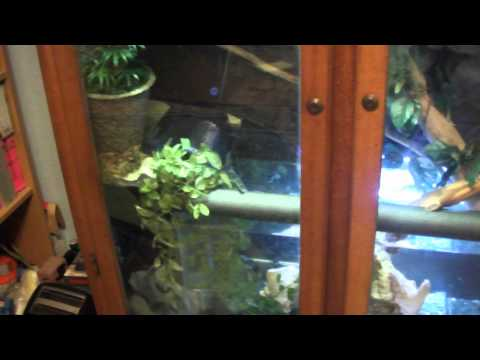 Making a tropical vivarium from a wood cabinet part 1