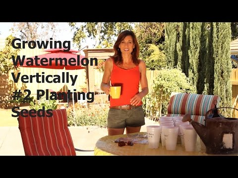 How to Start Watermelon Seeds in Cups