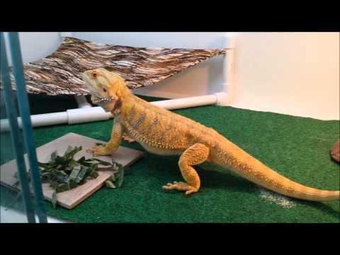 Cosmos, The Dragon: Crickets, Collard Greens, and Poop