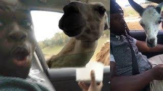 Vlog XII - My Mans Got Bit By A Deer LMFAO