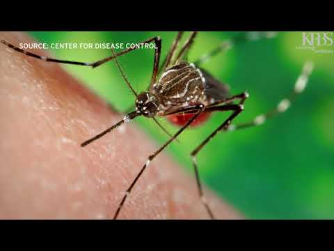 MOSQUITOES SOCIAL