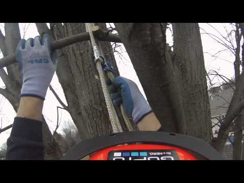 Pruning Maple Tree in back yard