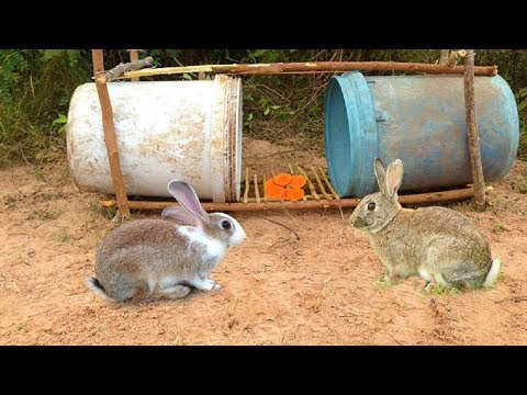 Amazing Quick Rabbit Trap Using Buckets - How To Make Rabbit Trap & Plastic Buckets Work 100%