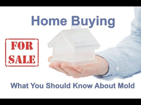 Home Buying & What You Should Know About Mold