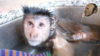 SPLISH SPLASH Double Monkey Bath!
