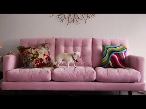 Homesetc: Donna Ida Thornton's colourful Berkshire home