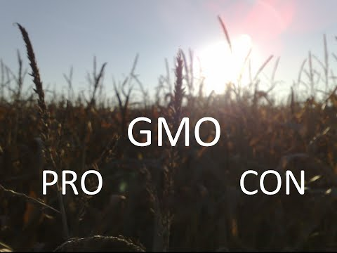 Pros and Cons of GMOs