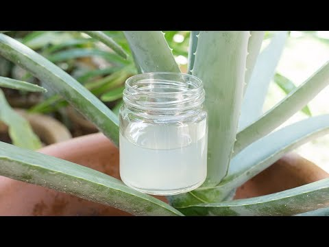 How to make Aloe Vera Gel at home from scratch