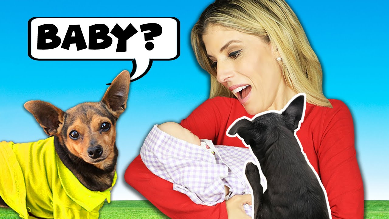 Dogs Meet Baby for the First Time - Emotional