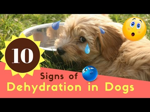 10 Signs of Dehydration in Dogs
