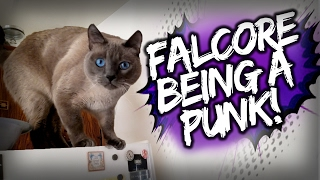 Falcore the Cat Being a Punk