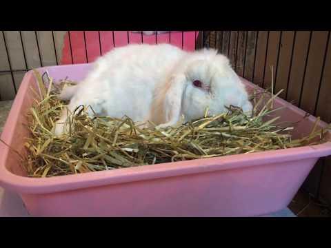 Fur mites in rabbits