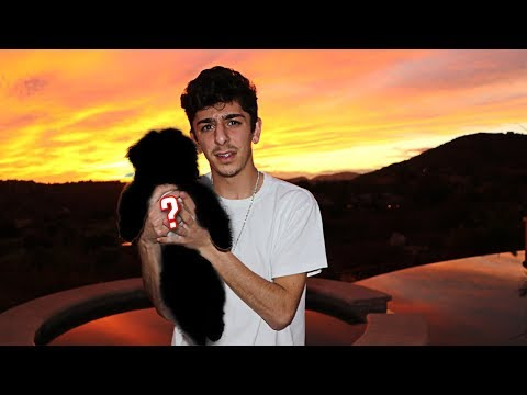 Look at what they did to my dog.. **WTF** | FaZe Rug