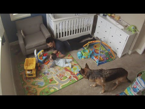 Time lapse: Baby Playing with Dad and Dogs. Dunder and Munster
