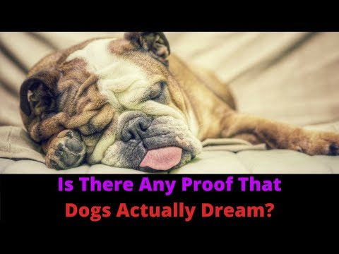 Do Dogs Dream? Why Do Dogs Twitch And Make Sound While Asleep?