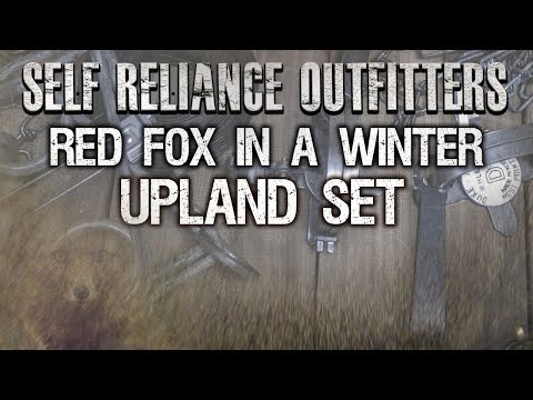 Red Fox in a Winter Upland Set