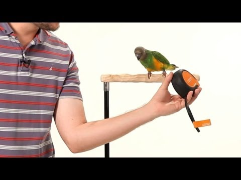How to Make Your Parrot Less Fearful | Parrot Training