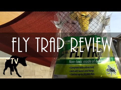 How to get ride of flies in backyard with multiple dogs | Rescue Fly Trap review