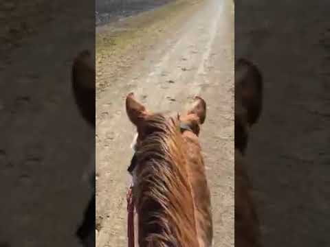 Splash head shaking while riding after Equiwinner treatment