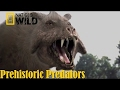 Download Best Documentary of All Time National Geographic Documentary - Prehistoric Predators: Killer Pig MP3,3GP,MP4