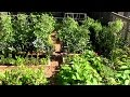 How to Grow a lot of Food in a Small Garden - 9 EZ tips