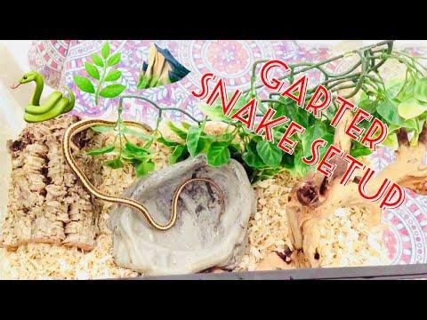 How to Set Up a (Garter) Snake Enclosure