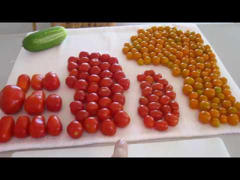 Tomato Taste Test Contest #1 Sun Sugar Cherry Container Garden Varieties Best Flavor Septoria Blight