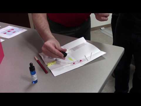 BSF Blood typing
