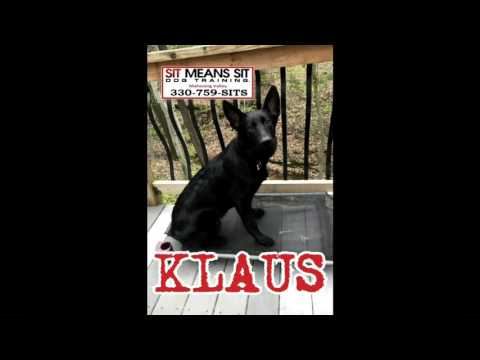 Klaus had food aggression with other dogs.
