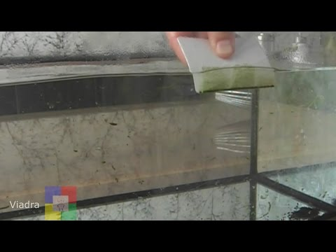 How to Clean an aquarium - Showing how to clean green algae off glass