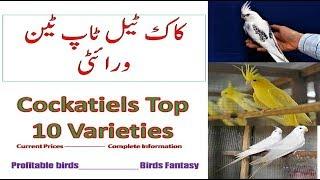 Best Summer food for Budgies Lovebirds cockatiel| Soft food