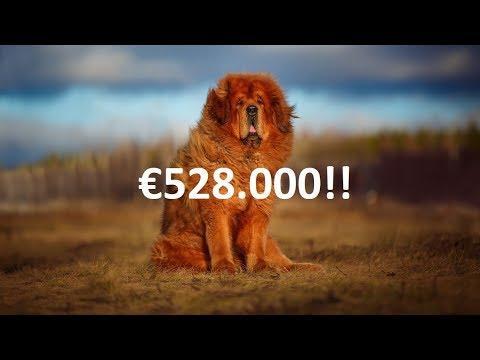 Die teuersten Haustiere, die es je gab!