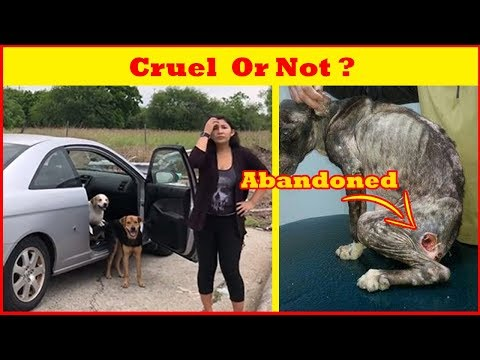 Woman Abandoned Cruely Her 4 Dogs