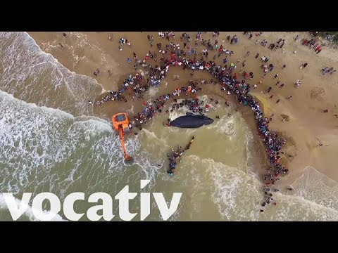 Over 200 People Helped Save This Stranded Humpback Whale