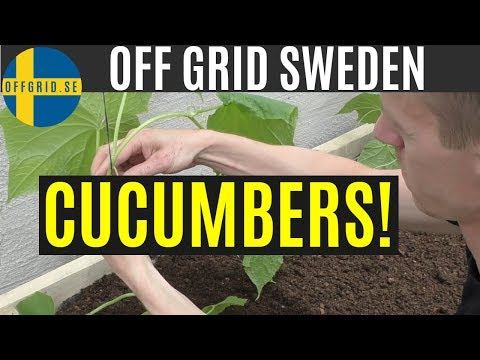 Greenhouse build — building a box & growing cucumbers